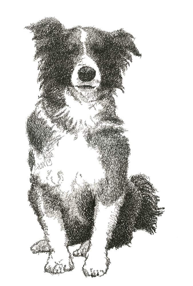 harry and louisas border collie commission text drawing made out of names harry