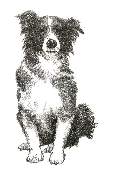 Harry and Louisa's Border Collie, commission, text drawing made out of names (Harry and Louisa).