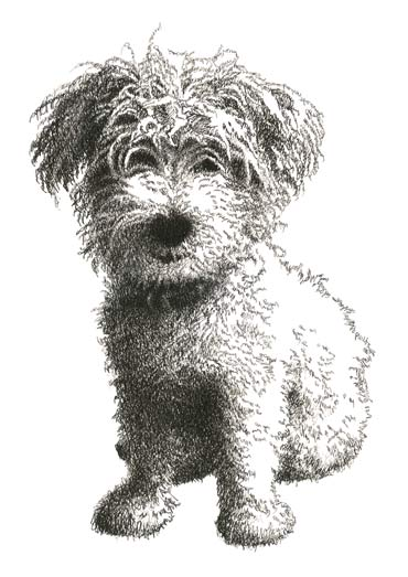 Poppy's Scottie, indian ink drawing made out of the name Poppy.