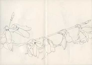 Sketchbook A5-06, 02. Line drawing, pencil (flowering branch).