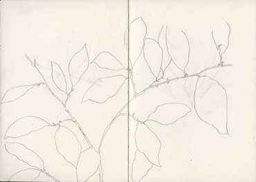 Sketchbook A5-06, 04. Line drawing, pencil (leafy branch).